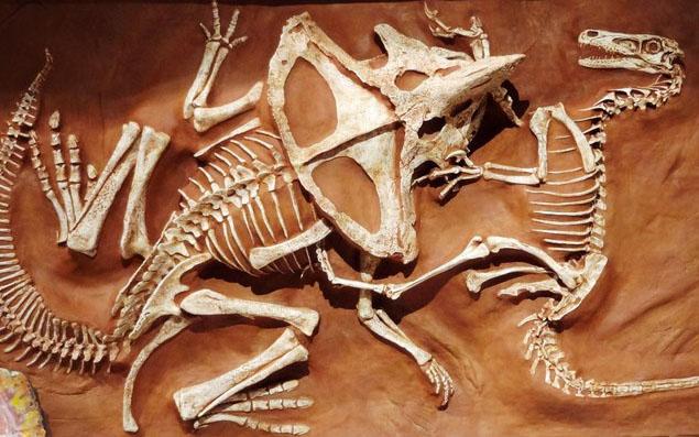 velociraptor-vs-protoceratopo