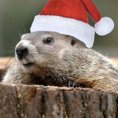 Un Natale da marmotta… o da figli di Dio?